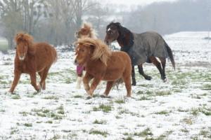 chevaux au pré avec imperméables sur le dos