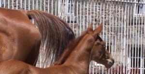 Quel délit à donc commis ce noble animal symbole d'espace et de liberté, pour se retrouver ainsi derrière les barreaux ?