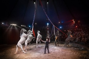 chevaux du cirque Gruss