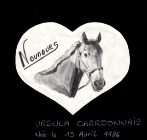dessin du cheval