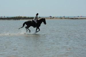 cheval et cavalier au galop dans la mer