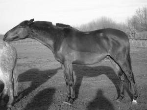 connaître le comportement du cheval