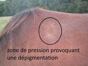 poils blancs sur le dos du cheval