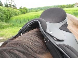 selle posée sur le dos d'un cheval