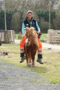 Scotch le poney shetland