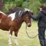 le poney devient vite le meilleur confident