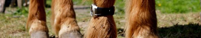 poney avec une montre !!