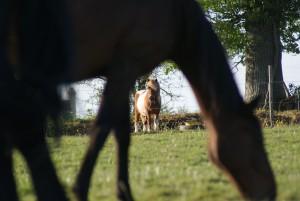 Ombres et lumières sur chevaux et poneys