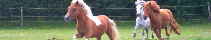 jeux de poneys shetland