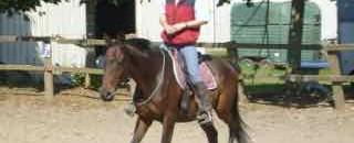 idéal équestre : le cheval libre dans la relation