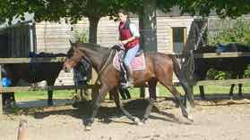 Olivo ce cheval qui m'a choisi !
