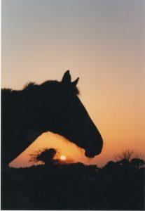 coucher de soleil sur lequel se dessine la jument