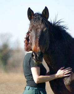 câlins à mon cheval